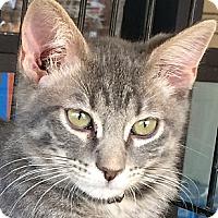Adopt A Pet :: Olaf - Winchester, CA