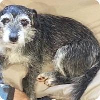 Adopt A Pet :: Jackie - Seneca, SC