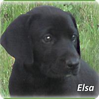 Adopt A Pet :: Elsa - ADOPTION PENDING - Marlborough, MA