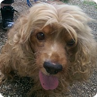 Adopt A Pet :: Taffy - Antioch, IL