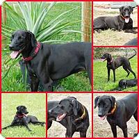 Adopt A Pet :: BONES - Davenport, FL