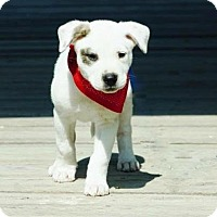 Adopt A Pet :: Patch-pending adoption - East Hartford, CT