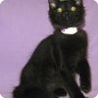 Adopt A Pet :: Nitro - Powell, OH