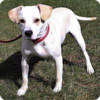 Adopt A Pet :: Frankie - Mt. Prospect, IL