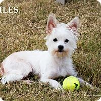 Adopt A Pet :: Miles - Patterson, CA