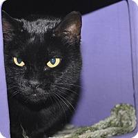 Adopt A Pet :: Hazel - Medina, OH