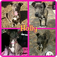 Adopt A Pet :: Holly - Mesa, AZ