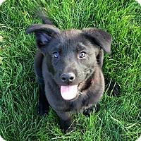 Adopt A Pet :: Winter - Phoenix, AZ
