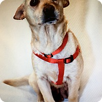 Adopt A Pet :: Zoey - Thousand Oaks, CA