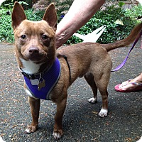 Adopt A Pet :: Kennedy - Adoption Pending - Gig Harbor, WA