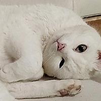 Adopt A Pet :: Dahlia - Durham, NC