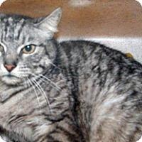 Adopt A Pet :: 299228 - Wildomar, CA