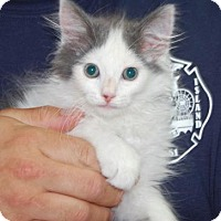 Adopt A Pet :: Markus - Brooklyn, NY