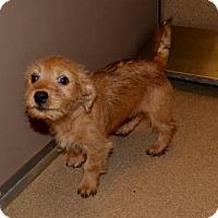 Adopt A Pet :: Mugsy - McKinney, TX