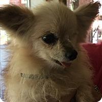 Adopt A Pet :: Babbs - Blanchard, OK