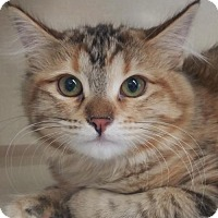Adopt A Pet :: Madeline - Walnut Creek, CA