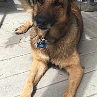 Adopt A Pet :: Kiki - calimesa, CA