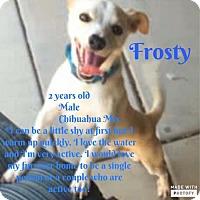 Adopt A Pet :: Frosty - Phoenix, AZ