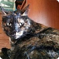 Adopt A Pet :: A..  Selma - Mooresville, NC