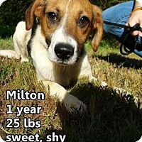 Adopt A Pet :: Milton - Woodstock, IL