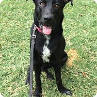 Adopt A Pet :: Alabama - Huntington Woods, MI