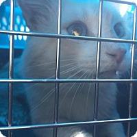 Adopt A Pet :: BLUE EYES - Corona, CA