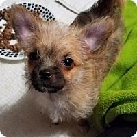 Adopt A Pet :: Taquito - Minneapolis, MN