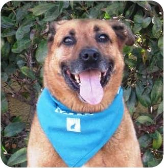 Shepherd (Unknown Type) Mix Dog for adoption in San Diego, California - Cowboy