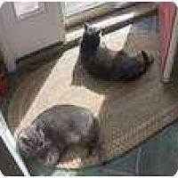 Adopt A Pet :: Puah - New York, NY