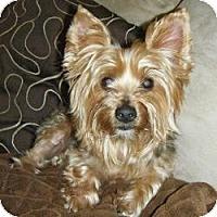 Adopt A Pet :: Jack - Spring Hill, FL