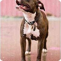 Adopt A Pet :: Princess - Portland, OR