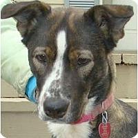 Adopt A Pet :: FRANCES - Wakefield, RI