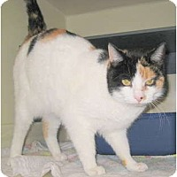 Adopt A Pet :: Kali - Saranac Lake, NY