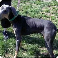Adopt A Pet :: Zach--adopted! - New Richmond, OH