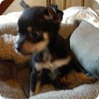Adopt A Pet :: Benjy - Staunton, VA