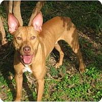 Adopt A Pet :: Mambo - Kingwood, TX