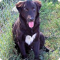 Adopt A Pet :: Clyde - Waller, TX