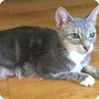Adopt A Pet :: Stacey - Vancouver, BC