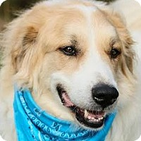 Adopt A Pet :: Aimes - Baltimore, MD