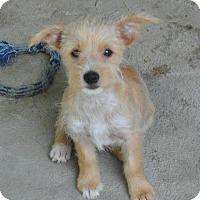 Adopt A Pet :: Chaco-meet me 8/28 - East Hartford, CT