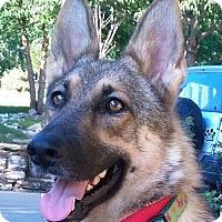 Adopt A Pet :: Mia (Adoption Pending) - Kansas City, MO