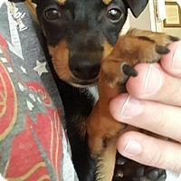 Adopt A Pet :: Olive - North Brunswick, NJ