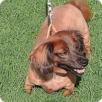 Adopt A Pet :: Fudge - Phoenix, AZ