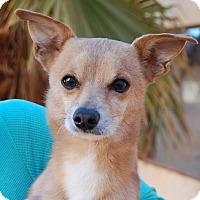 Adopt A Pet :: Little Deer - Las Vegas, NV