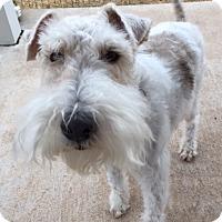 Adopt A Pet :: SHOESHINE - Dumont, IA