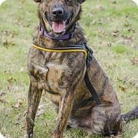 Adopt A Pet :: Bacon - Greenwood, SC