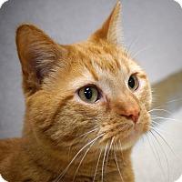 Adopt A Pet :: J.T. - Naperville, IL