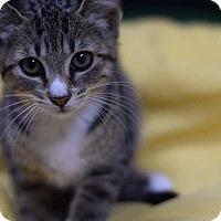 Adopt A Pet :: Theda - Manhattan, NY