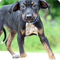Adopt A Pet :: Vegas - Waldorf, MD