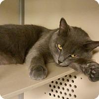 Adopt A Pet :: Bleau - Franklin, NH